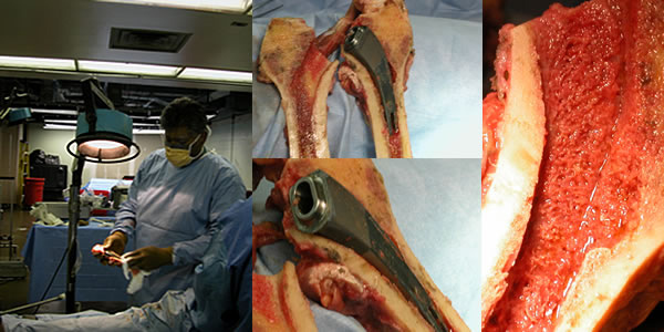additional-cadaver-studies-img